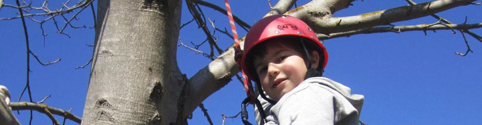 Tree climbing ludico