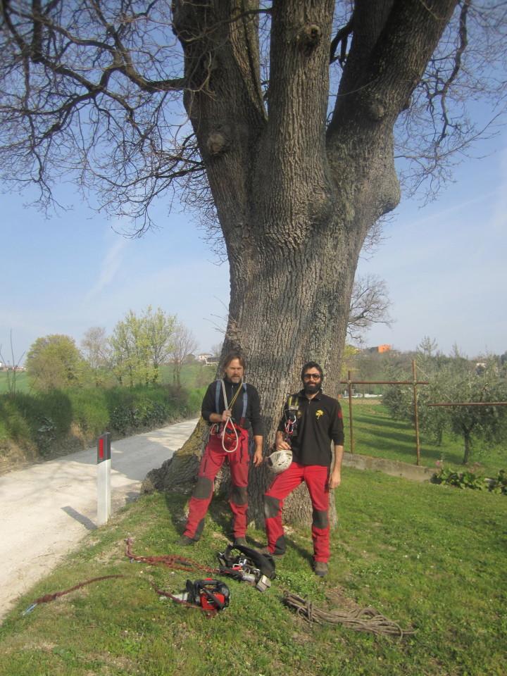 QUERCE tra Jesi, Castelfidardo, Filottrano, Pesaro…
